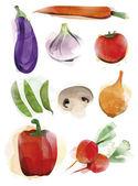 Watercolor Vegetable — Stock Vector