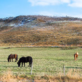 Three horses grazing on the grass — Foto de Stock