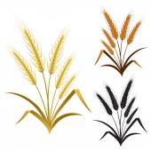 Ears of wheat rye or barley decorate element set — Stock Vector