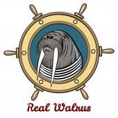 The Walrus — Stock Vector