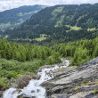 Fast mountain riveramong green alpine forest — Stock Photo #59699781