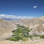 Green fields among desert mountains — Stock Photo #59699445