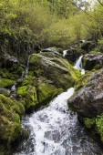 Water stream in green humid forest — Stock Photo