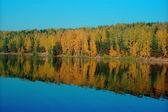 Reflexão de floresta de outono — Fotografia Stock