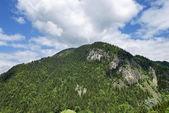 Альпийский летний горный лес — Стоковое фото