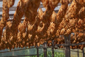 Tobaksblad bundna i rep — Stockfoto
