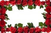 Red roses frame. — Stock Photo