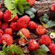 Wild strawberries. — Stock Photo #71411985