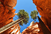 Bryce Canyon National Park, Utah — Stock Photo