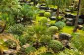 Beautiful green landscape design — Photo