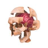 Skull with Brain — Stock Photo