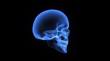 头骨 — 图库视频影像