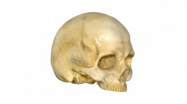 Crâne — Vidéo