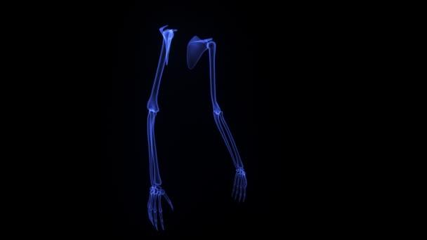 Manos de esqueletos — Vídeo de stock