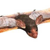 Bat. — Stock Photo