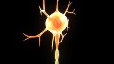 Nöron — Stok video