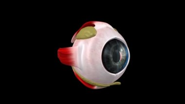 Human Eye — Stock Video