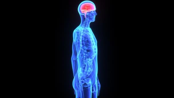 Cerebro humano — Vídeo de stock