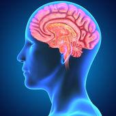 Intersección de cerebro — Foto de Stock
