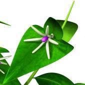 Green uscus branch — Stockfoto
