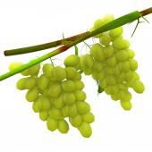 Vitis vinifera — Fotografia Stock