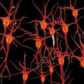 Neural tissue — Stock Photo
