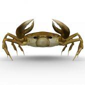 Crab isolated on white — ストック写真