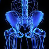 Pelvic hip x-ray — Stock Photo