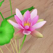 Nelumbo pink flower — Stock Photo