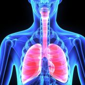 Human lungs — Stock Photo