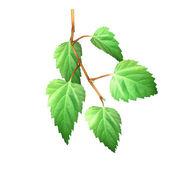 Birch leaves — Stock Photo