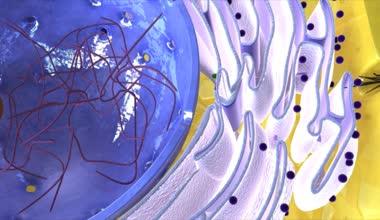 Golgi apparatus science animation — Stock Video