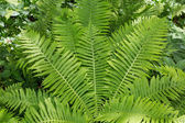 Fern forest — Stock Photo