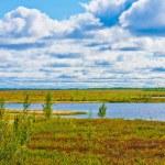Paints of autumn nature north — Stock Photo #52936153