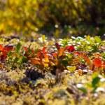 Paints of autumn nature north — Stock Photo #52940961