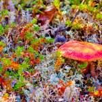 Paints of autumn nature north — Stock Photo #52940971