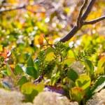 Paints of autumn nature north — Stock Photo #52941155