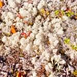 Paints of autumn nature north — Stock Photo #52941259