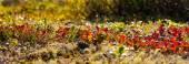 Paints of autumn nature north — Stock Photo