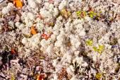北秋自然塗料 — ストック写真