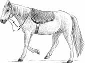 Saddled horse — Stock Vector