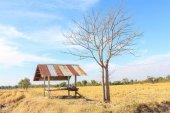 Farmhouse in rural areas — Stock Photo