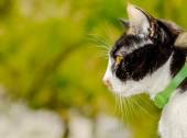 Domestic cat looking out the window — Stock Photo