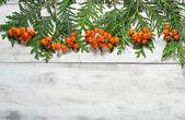 çam ağacı ve rowan berry ile noel çerçeve — Stok fotoğraf