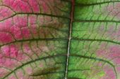 Red and green leaf — Stock Photo
