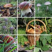 Edible mushrooms — Foto Stock