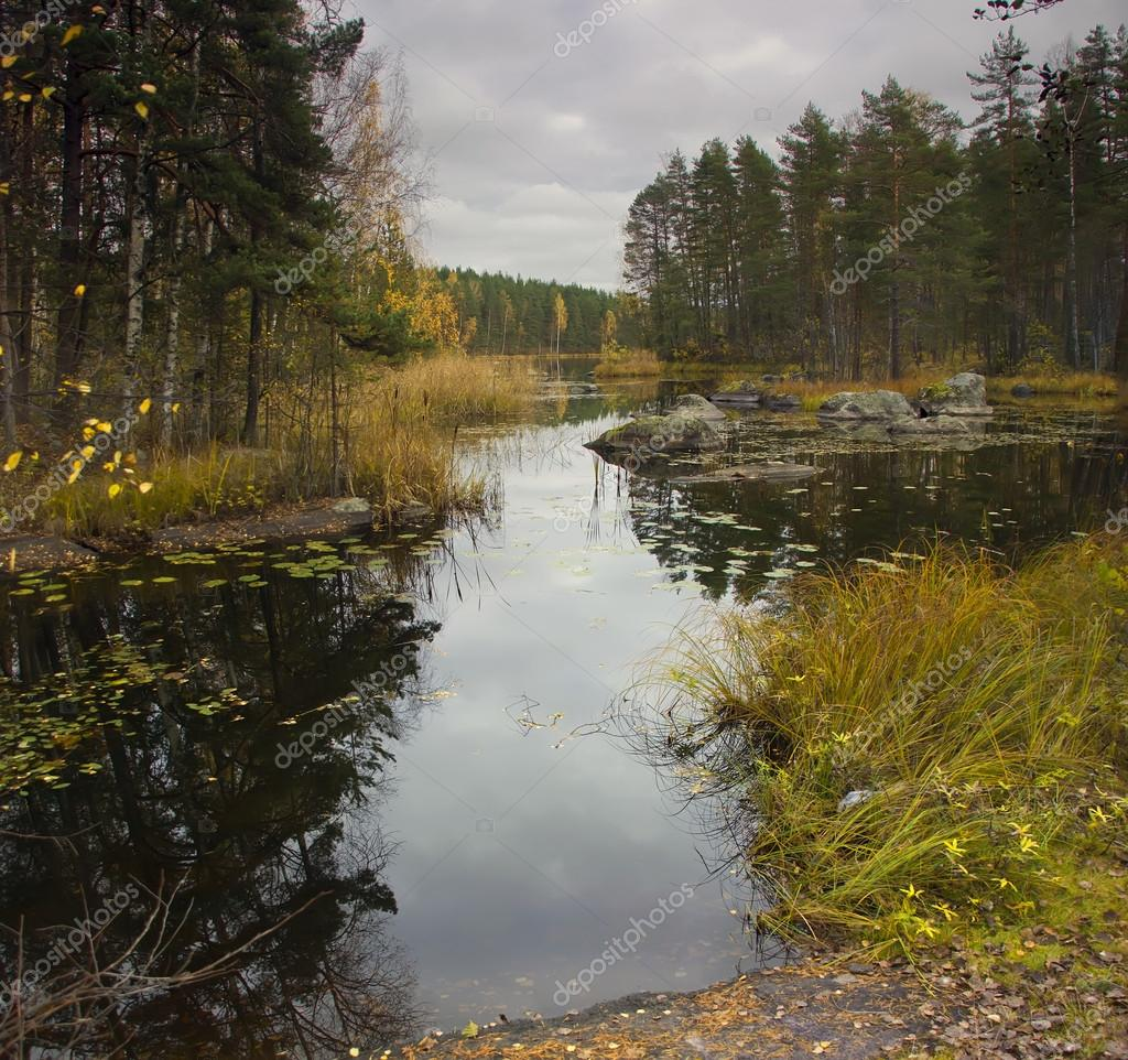 лесные реки и озера рыбалка