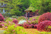 Chinese garden — Stock Photo