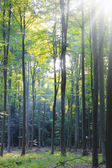 Morning in the deciduous forest — Stock Photo