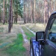 Jeep Wrangler in a pine forest — Stock Photo #61337433